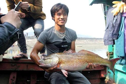 Mệt mỏi vì phải canh giữ con cá vàng óng ánh, giá tiền tỷ - 1