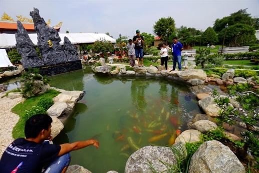 Bất ngờ đàn cá đặt tên Hoài Linh, Trấn Thành, Mr Đàm - 2
