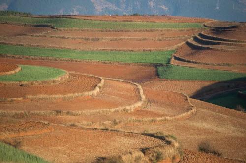 Ngỡ ngàng ruộng bậc thang đỏ rực khác lạ ở Trung Quốc - 9
