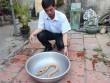 Người dân Bạc Liêu bắt được lươn vàng, chấm đen kỳ lạ
