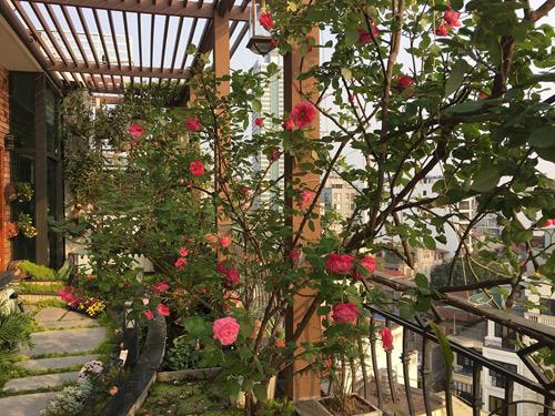 Không cần quà 8/3 vì có cả vườn hồng đẹp như mơ - 1