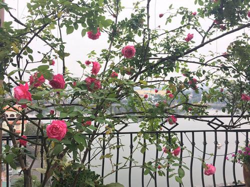 Không cần quà 8/3 vì có cả vườn hồng đẹp như mơ - 4
