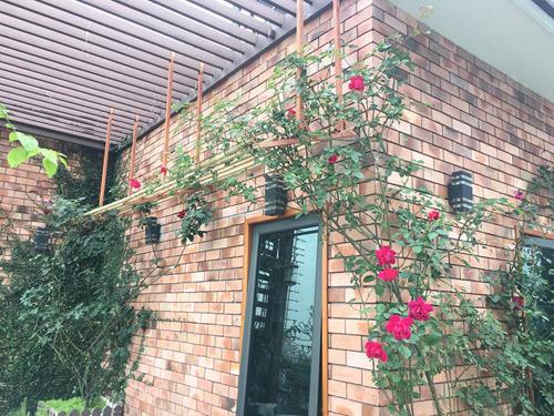 Không cần quà 8/3 vì có cả vườn hồng đẹp như mơ - 6