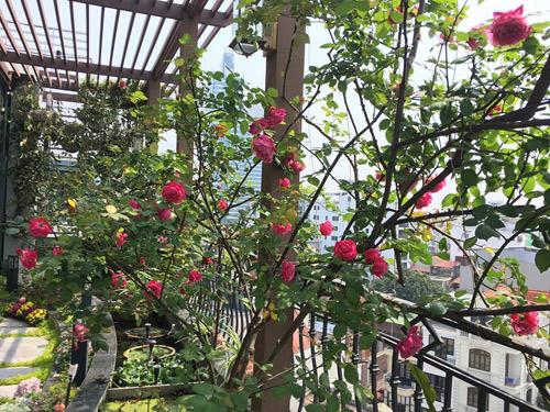 Không cần quà 8/3 vì có cả vườn hồng đẹp như mơ - 7