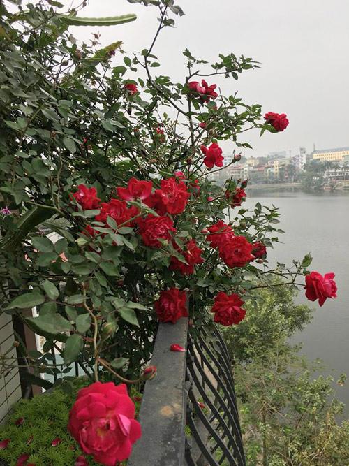 Không cần quà 8/3 vì có cả vườn hồng đẹp như mơ - 11