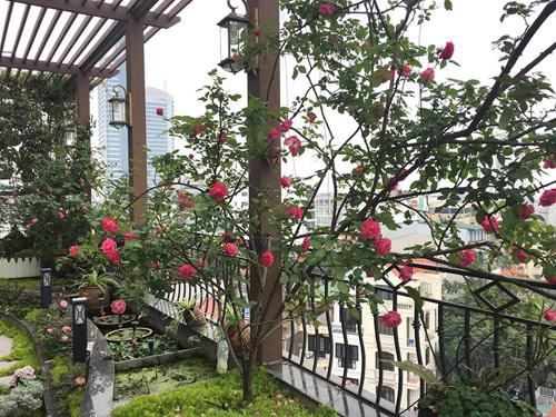 Không cần quà 8/3 vì có cả vườn hồng đẹp như mơ - 14