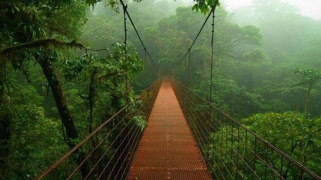 Rừng rậm Amazon thực chất là một kế hoạch lỗi? - 3