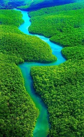Rừng rậm Amazon thực chất là một kế hoạch lỗi? - 1