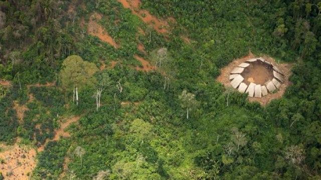 Rừng rậm Amazon thực chất là một kế hoạch lỗi? - 2