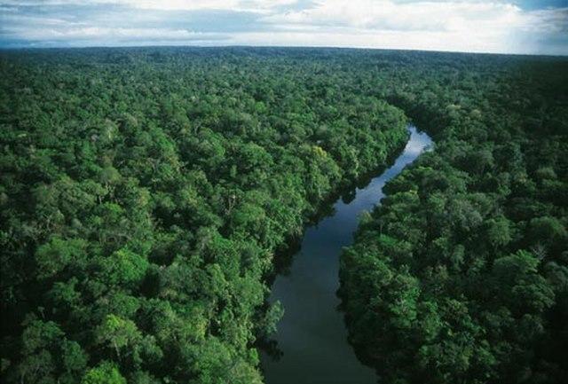 Rừng rậm Amazon thực chất là một kế hoạch lỗi? - 5