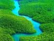 Rừng rậm Amazon thực chất là một kế hoạch lỗi?