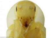 Phát hiện gián trông như sinh vật ngoài hành tinh ở Việt Nam