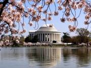 12 bức ảnh đẹp ảo diệu về mùa hoa anh đào