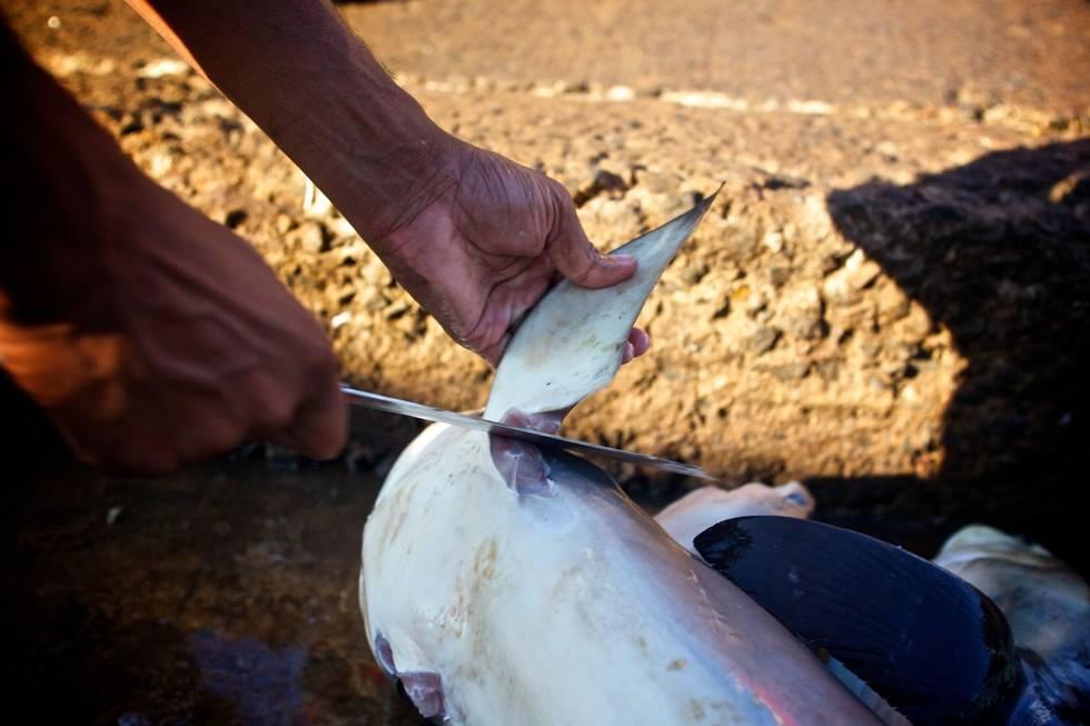 Sốc với hàng ngàn vây cá mập phơi kín sân thượng TQ - 6