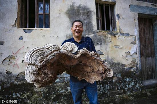 Choáng với cây nấm linh chi khổng lồ mới phát hiện ở TQ - 1