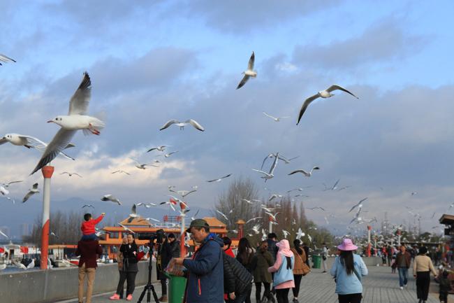 Cứ mỗi mùa xuân về, Hồ Điền Trì lại trở nên nhộn nhịp hơn nhờ bày Hải Âu bay về tránh rét. Hồ Điền Trì, một địa danh nổi tiếng thuộc thành phố Côn Minh, thủ phủ tỉnh Vân Nam, Trung Quốc, được mệnh danh là  viên ngọc quý  với mặt nước trong xanh được bao quanh bởi ngọn núi Tây Sơn xanh tươi.