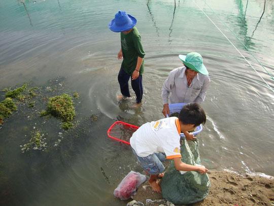 Nuôi tôm sú kiểu mới ở Ninh Thuận - 1