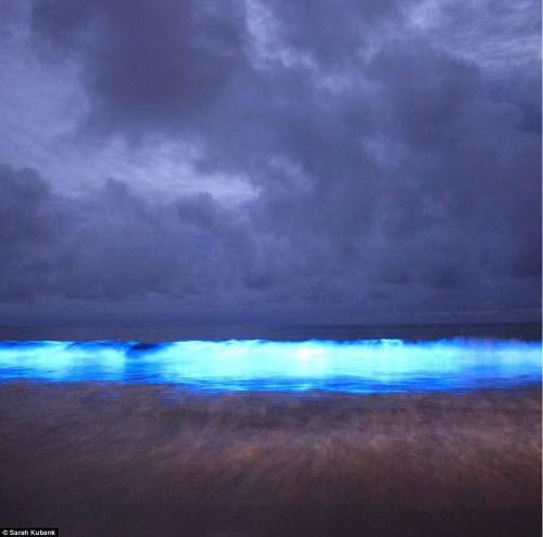 Nước biển phát sáng xanh lè bí ẩn ở Australia - 4