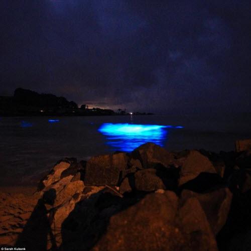 Nước biển phát sáng xanh lè bí ẩn ở Australia - 5