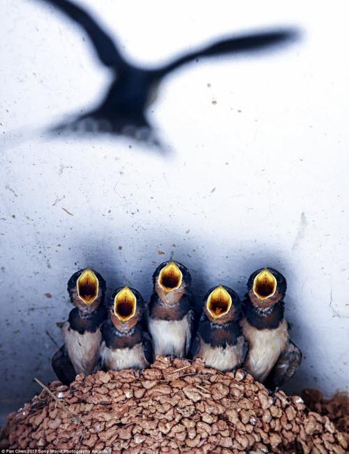 Ảnh đẹp lặng người của cuộc thi ảnh lớn nhất thế giới - 11
