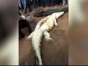 Thế giới - Zimbabwe: Mổ bụng cá sấu phát hiện bé 8 tuổi bên trong