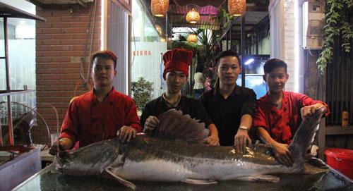 """Cá lăng """"khủng"""", râu dài gần 1m xuất hiện ở Hà Nội - 1"""