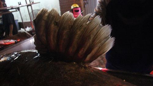 """Cá lăng """"khủng"""", râu dài gần 1m xuất hiện ở Hà Nội - 4"""