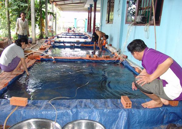 Bắt cá trê vàng đẻ… ra vàng chỉ trong 6 ngày - 2
