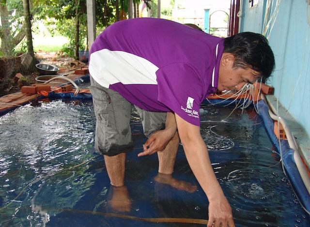 Bắt cá trê vàng đẻ… ra vàng chỉ trong 6 ngày - 1