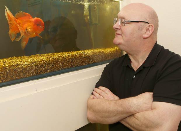 """Cá vàng """"khủng"""" nhất nước Anh giá gần 130 triệu đồng - 2"""