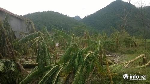 Thanh Hóa tan hoang sau trận mưa đá dày đặc hiếm thấy - 11