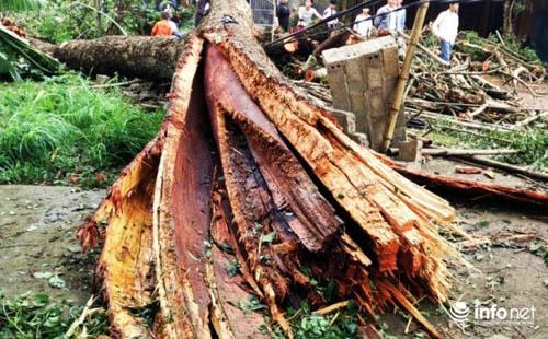Thanh Hóa tan hoang sau trận mưa đá dày đặc hiếm thấy - 5