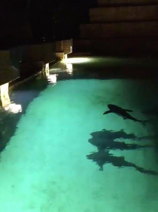 """Nhảy xuống bể nước, không ngờ bị cá mập đuổi """"té khói"""" - 1"""