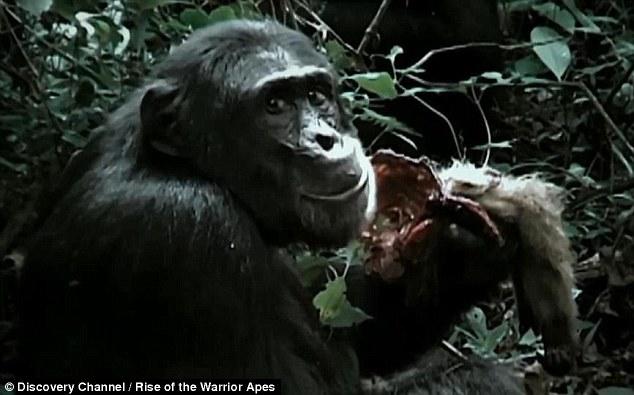 Băng đảng tinh tinh tàn bạo nhất, xé xác khỉ ăn sống - 1