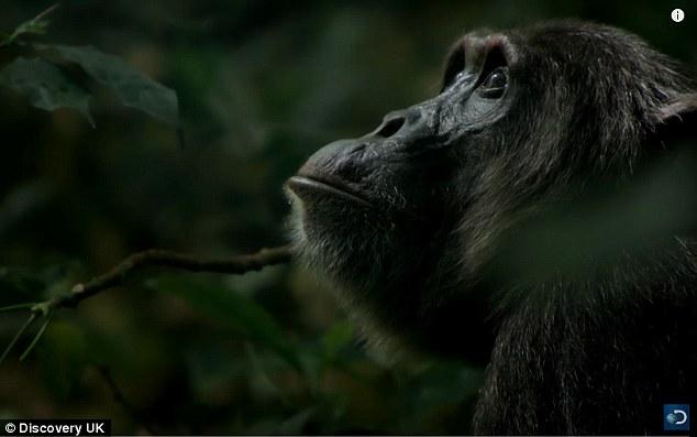 Băng đảng tinh tinh tàn bạo nhất, xé xác khỉ ăn sống - 3