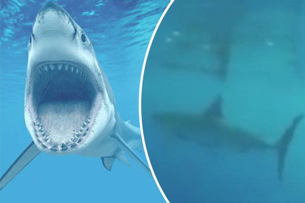 Mỹ: Bị cá mập trắng vây hãm, vẫn dũng cảm làm điều này - 1