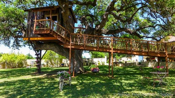 Nhà tổ chim trên cây 450 tuổi đẹp ngỡ ngàng - 3