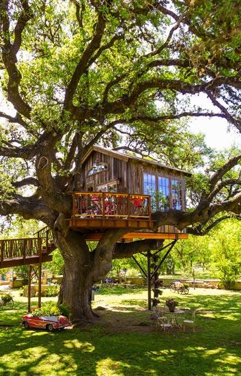 Nhà tổ chim trên cây 450 tuổi đẹp ngỡ ngàng - 1