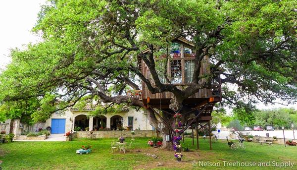 Nhà tổ chim trên cây 450 tuổi đẹp ngỡ ngàng - 4