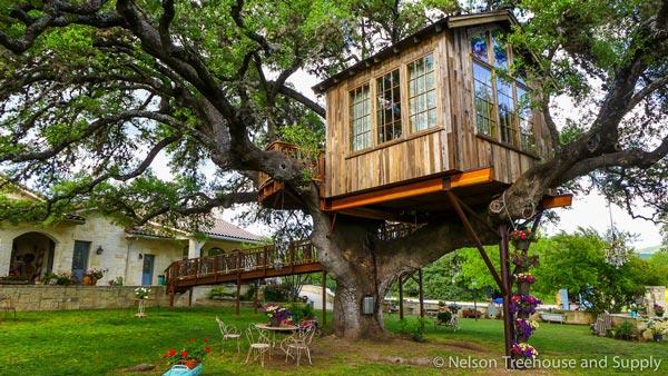 Nhà tổ chim trên cây 450 tuổi đẹp ngỡ ngàng - 2