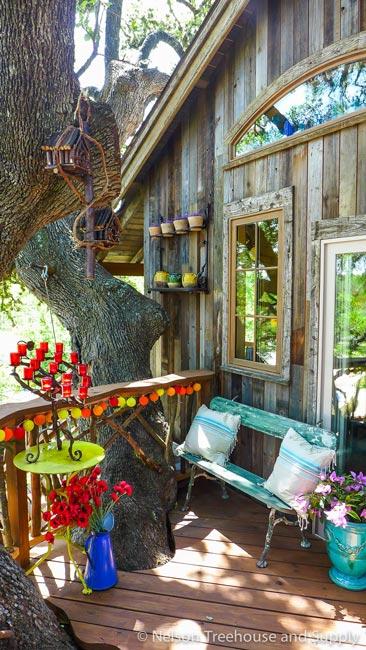 Nhà tổ chim trên cây 450 tuổi đẹp ngỡ ngàng - 9