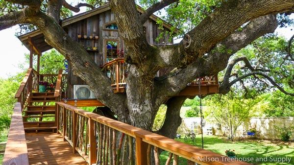 Nhà tổ chim trên cây 450 tuổi đẹp ngỡ ngàng - 10