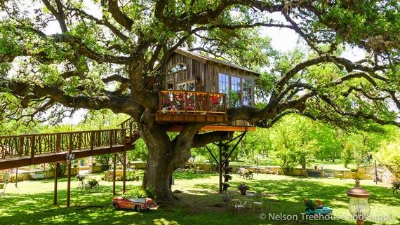Nhà tổ chim trên cây 450 tuổi đẹp ngỡ ngàng - 13