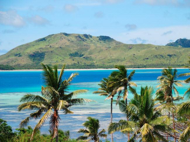 Hàng cọ đua đua trên đảo nhiệt đới Fiji.