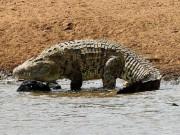 Thế giới - Cầu thủ Mozambique bị cá sấu khổng lồ dài 5m ăn thịt