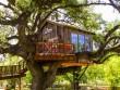 Nhà tổ chim trên cây 450 tuổi đẹp ngỡ ngàng