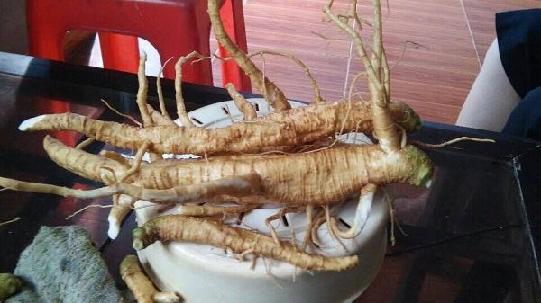 Ngộ độc loại củ giống hệt nhân sâm - 5