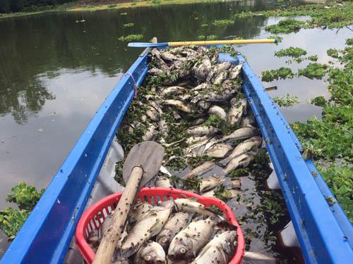Bình Dương: Cá chết hàng loạt, dân lén lút ướp muối - 1