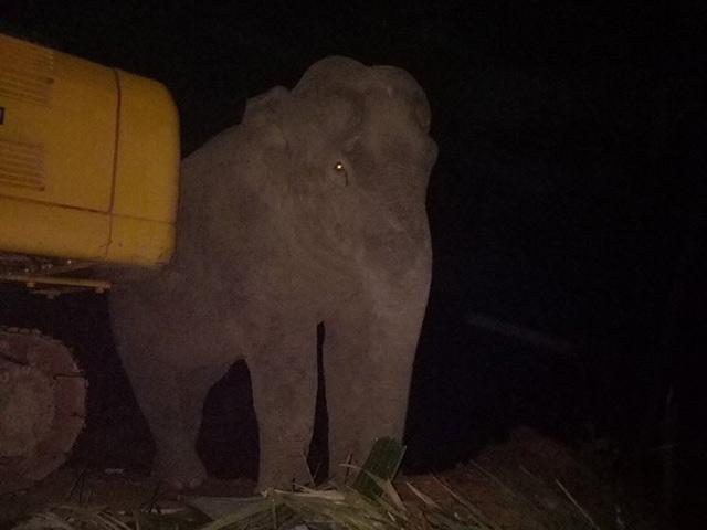 """Nửa đêm, voi rừng vào lán thăm """"người quen"""" - 1"""