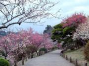 Du lịch - Mê mẩn khu vườn hàng nghìn cây hoa mận bung nở rực rỡ